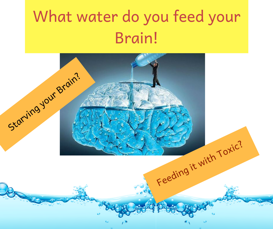 What water do u feed your brain