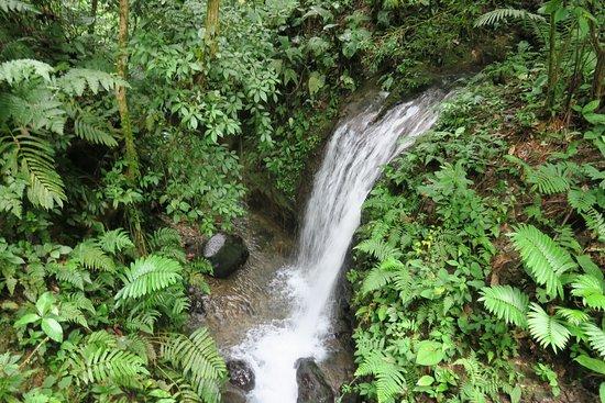 Chachagua Rainforest Waterfall