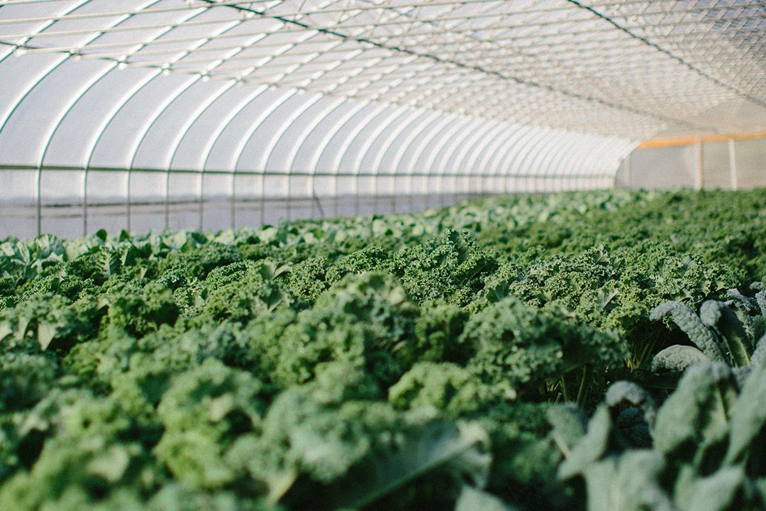 Bloomsbury Farm Greenhouse