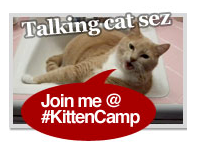 #KittenCamp Bristol July 2012
