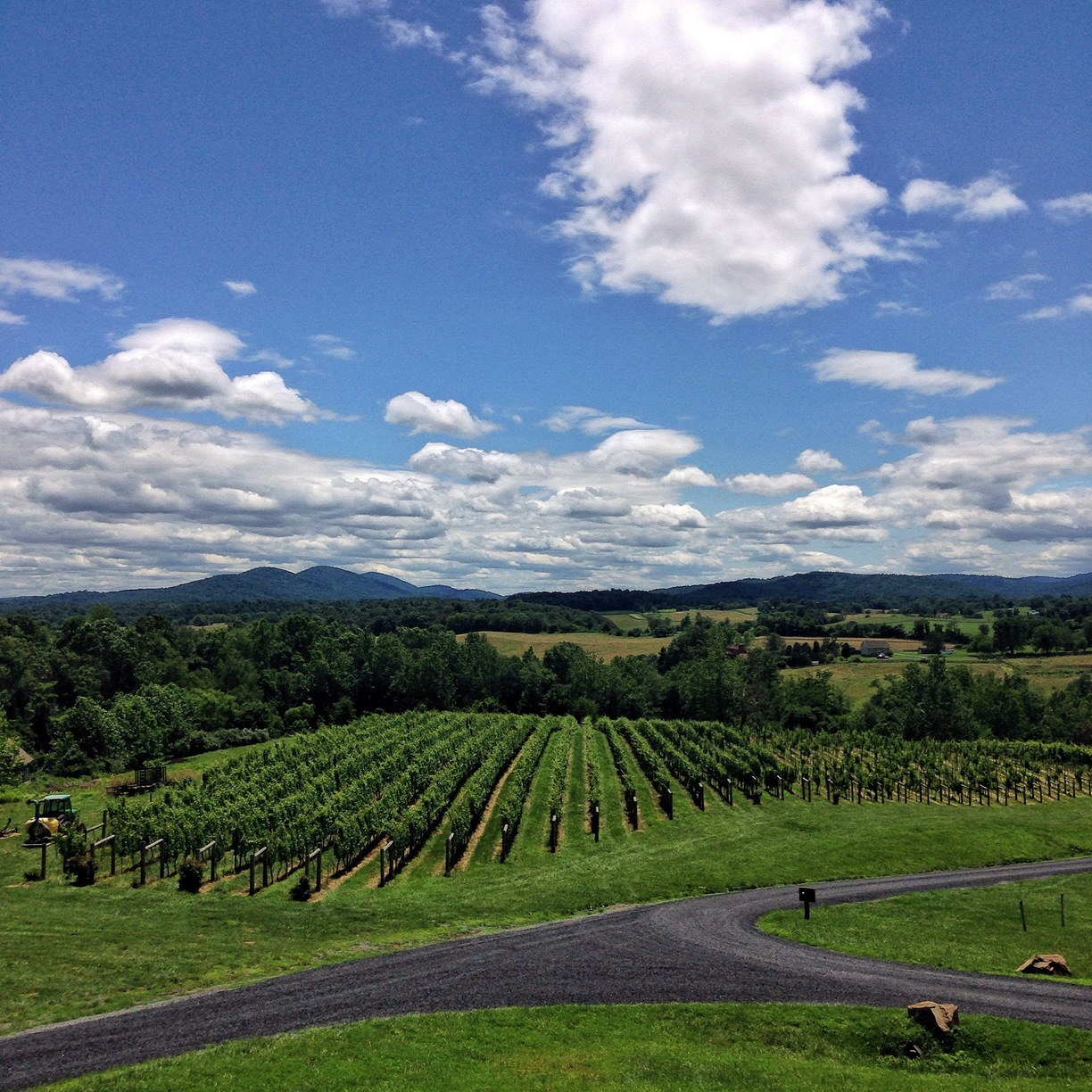 Blue Valley Winery - View of Vineyard