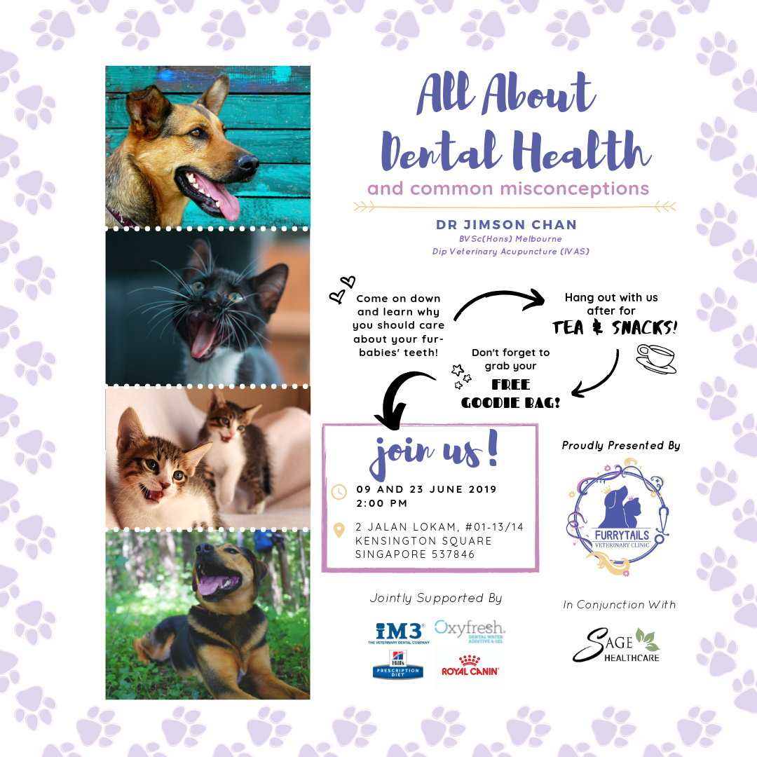 Dr Jimson Chan offers a free talk on pet dental health