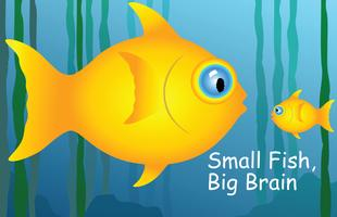 Big Fish, Small Fish - M&A in Social Gaming