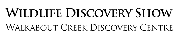 Wildlife Discovery Show