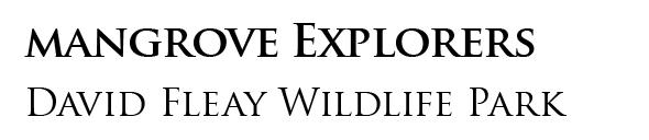 Mangrove Explorers Header