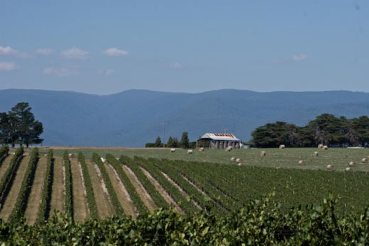 Yarra Valley Vineyard Image