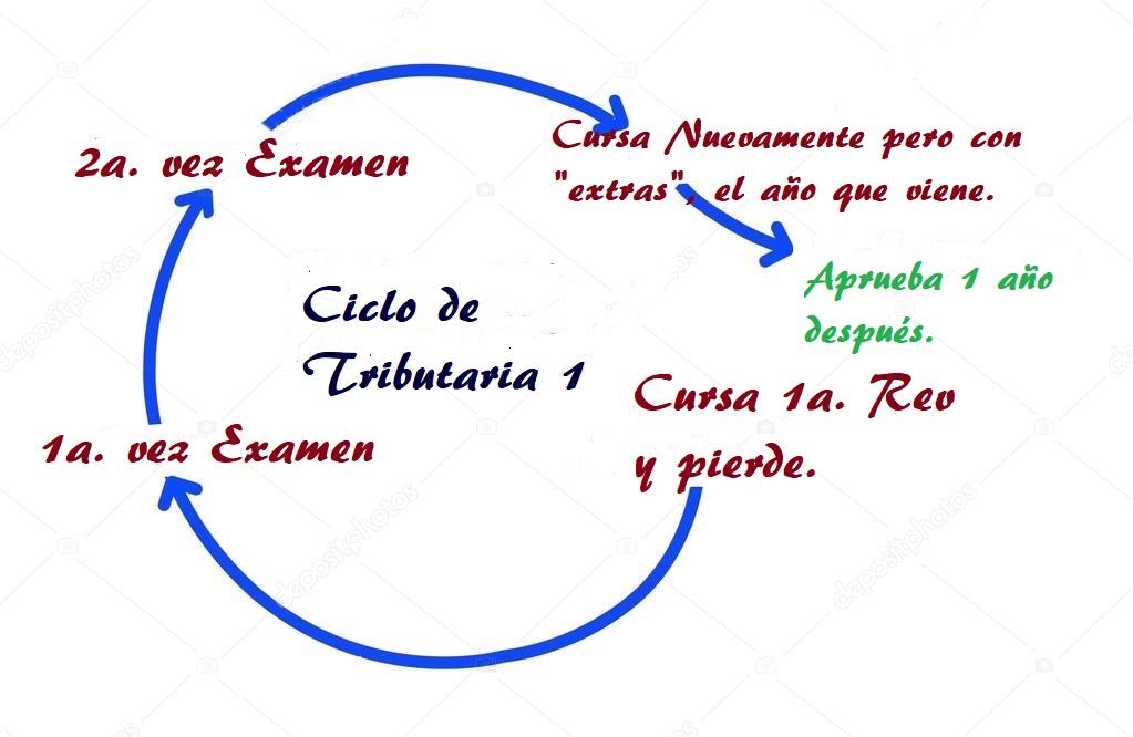 Ciclo Normal de 1 año