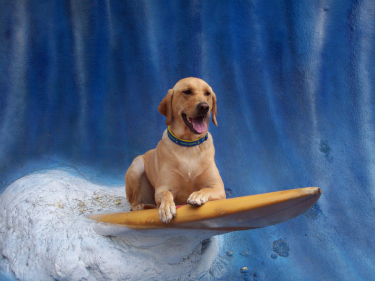 Jag surfs it up