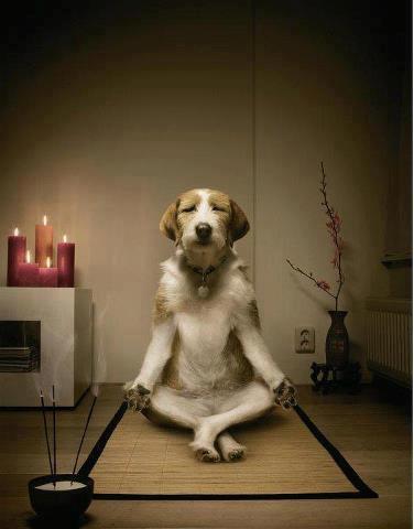 zen au travail
