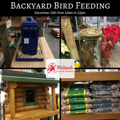 Bird Feedings