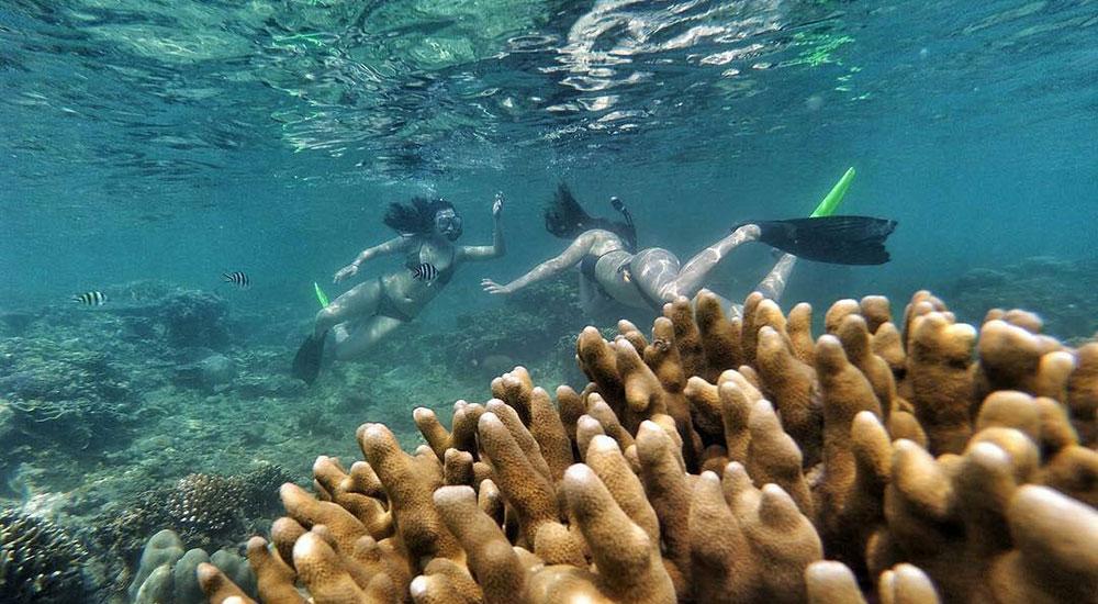 aktivitas snorkeling di pulau harapan