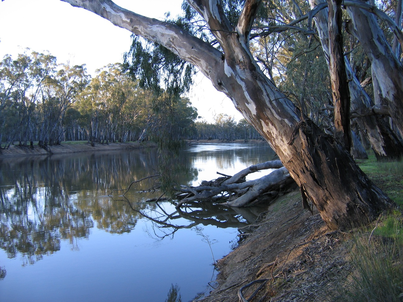 Murray River at Gunbower
