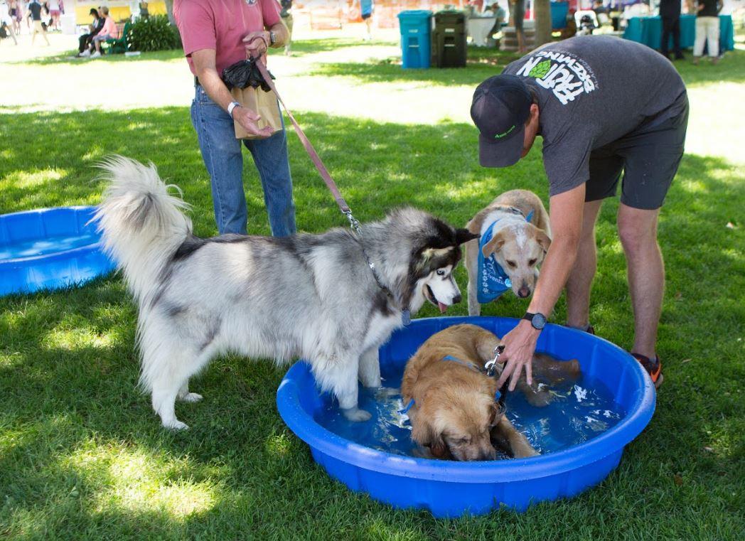 canine festival fans cool off at the Splash Station