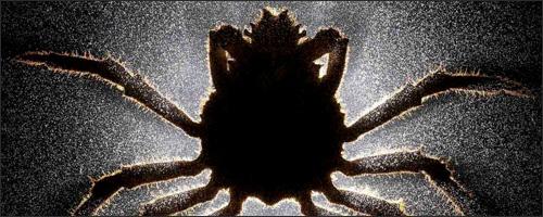 Anand Varma: Zombie Parasites