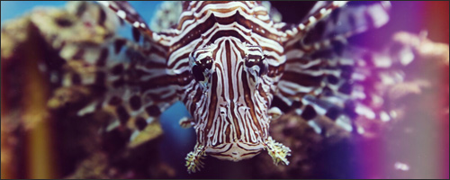 Erin Spencer: The Lionfish King