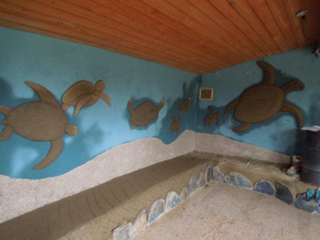 Turtle Room