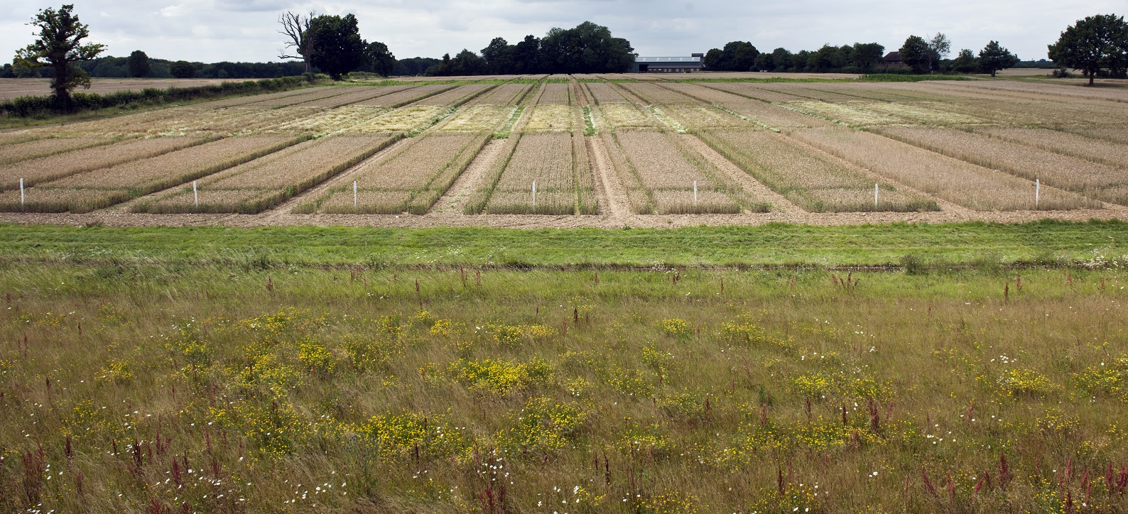 Rothamsted Research - Broadbalk Experiment