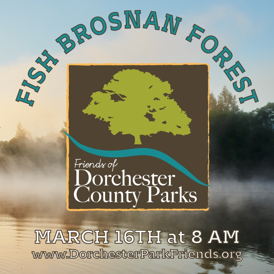 Logo Fish Brosnan Forest 2019