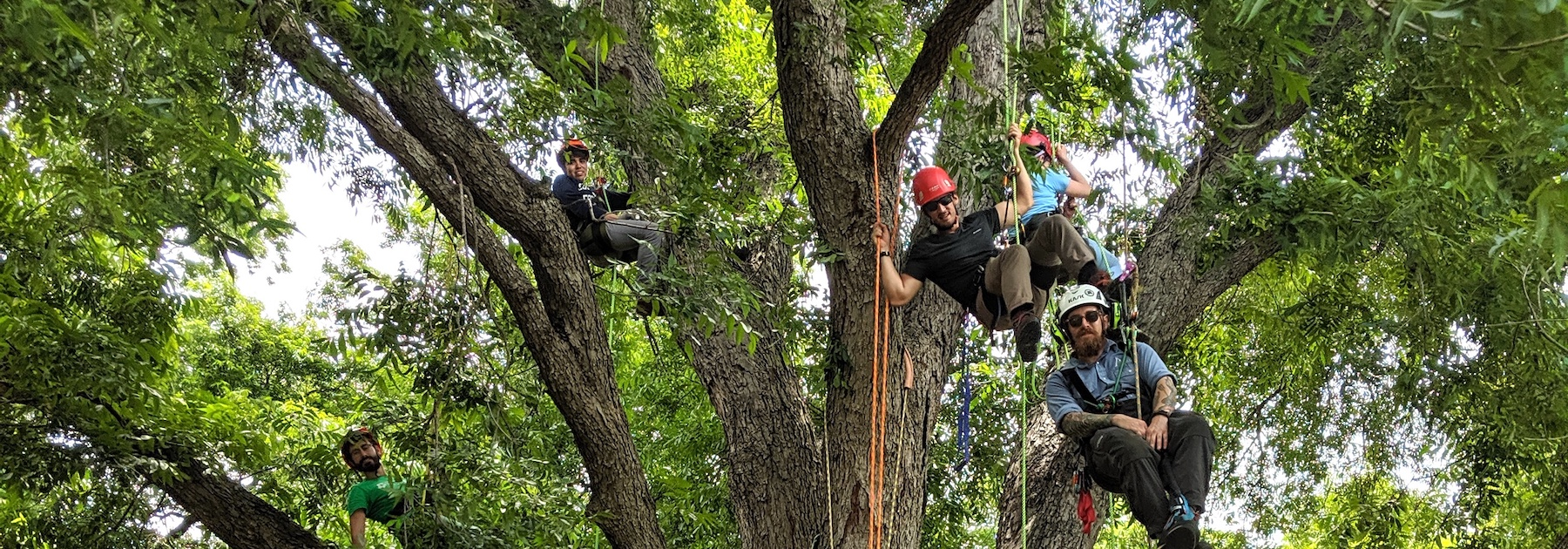 People Climbing Tree