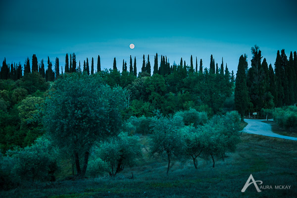 Moon rising over a stand of cypress trees in Tuscany, Italy