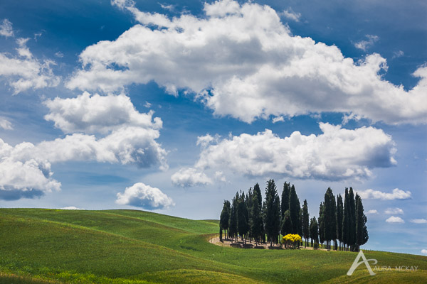 Cypress grove in the rolling hills of Tuscany, Italy
