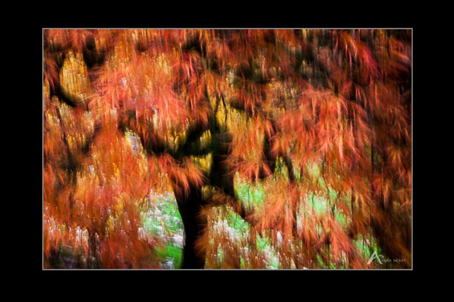 Abstract photograph of fall colours by Aura McKay