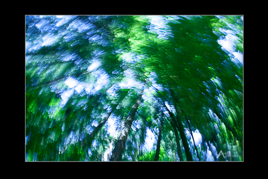 Intentional motion blur of green tree tops, photographed by Aura McKay
