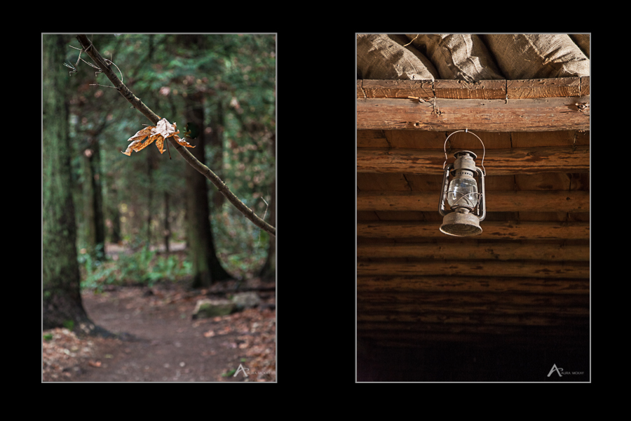 Two images of forests and old lantern in colour, photographed by Aura McKay