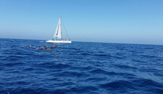 Gran Canaria Dolphin trip