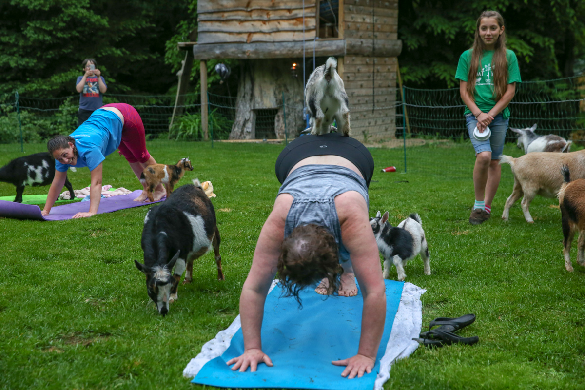 NY Goat Yoga In The Woods