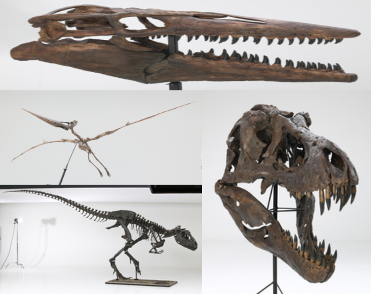 Don't miss the Creation Truth Foundation's Mobile Dinosaur Exhibit which will be with us the whole weekend!