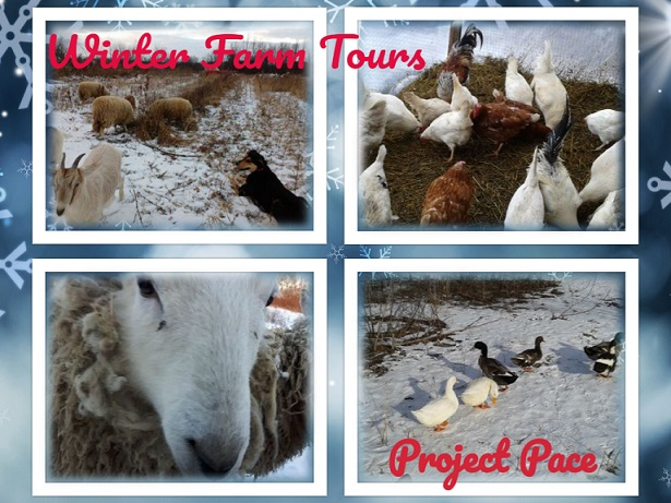 WinterFarmTours_ProjectPace