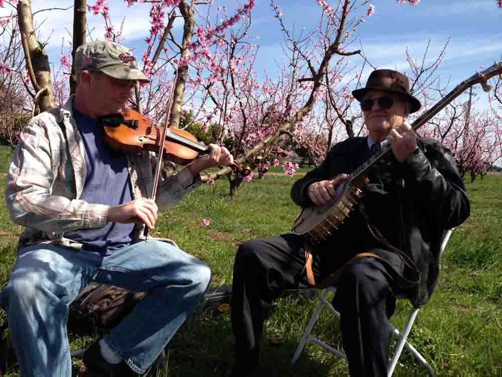 blue grass music in orchard