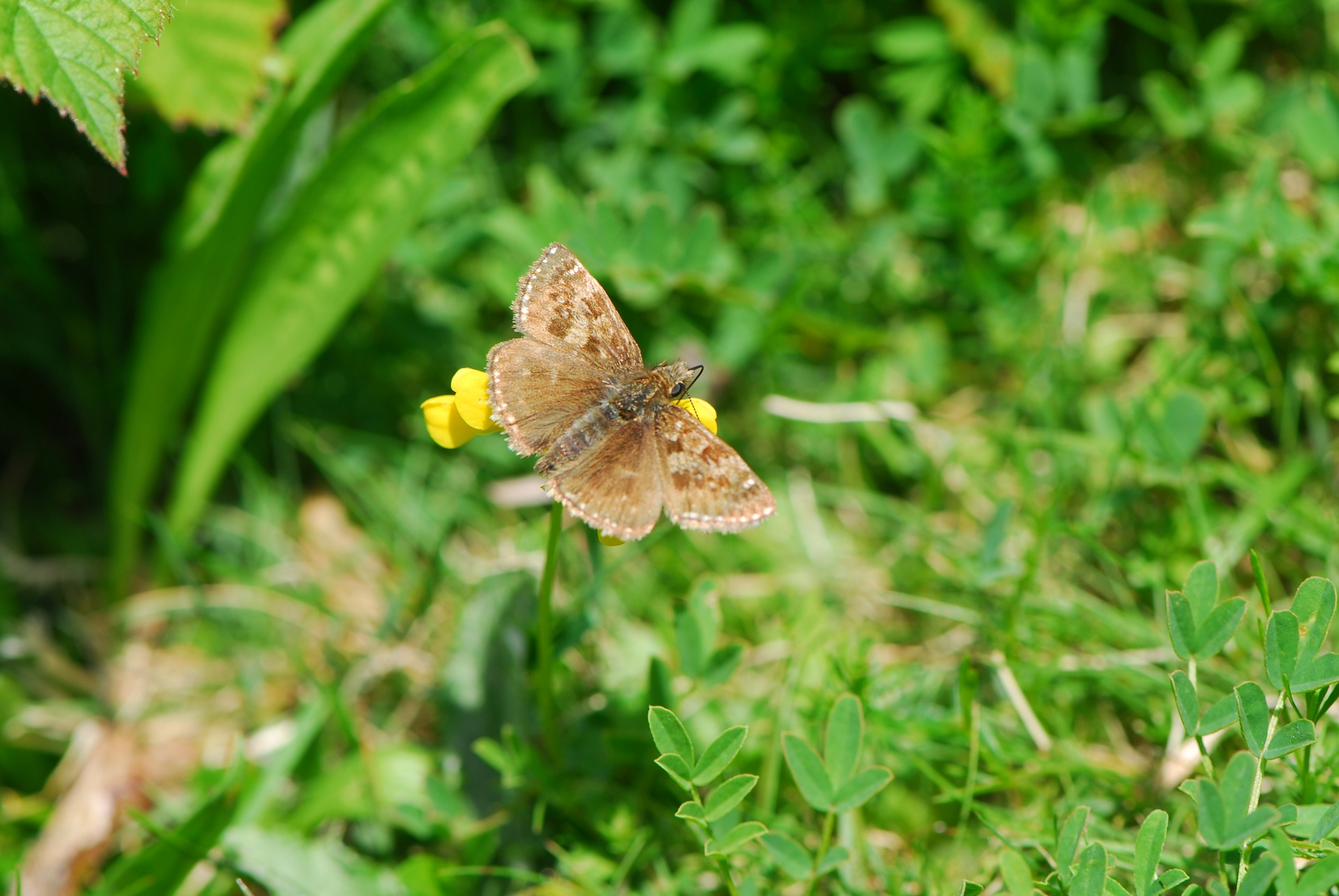 Cheshire Butterflies And Some Moths Free Public Lecture Tickets Tiket Butterfly Park Insect Kingdom