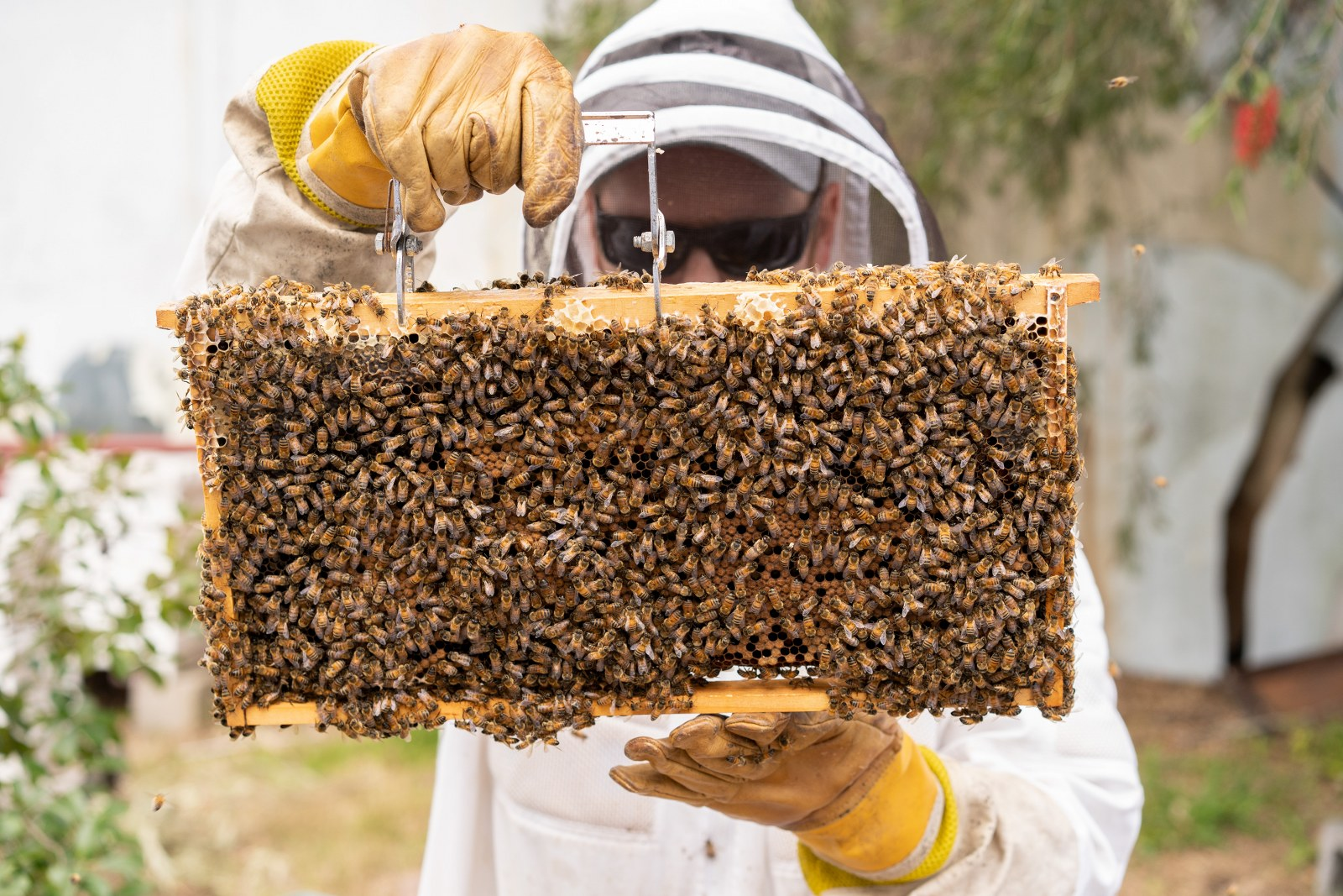 beekeeping class photo