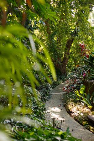 Kahaluu Gardens path