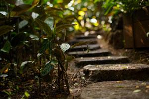 Kahaluu Gardens stepping stones