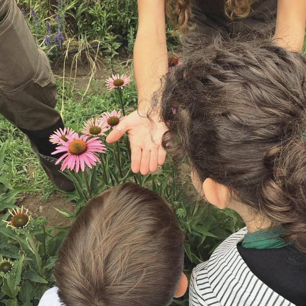 Niños observando insectos