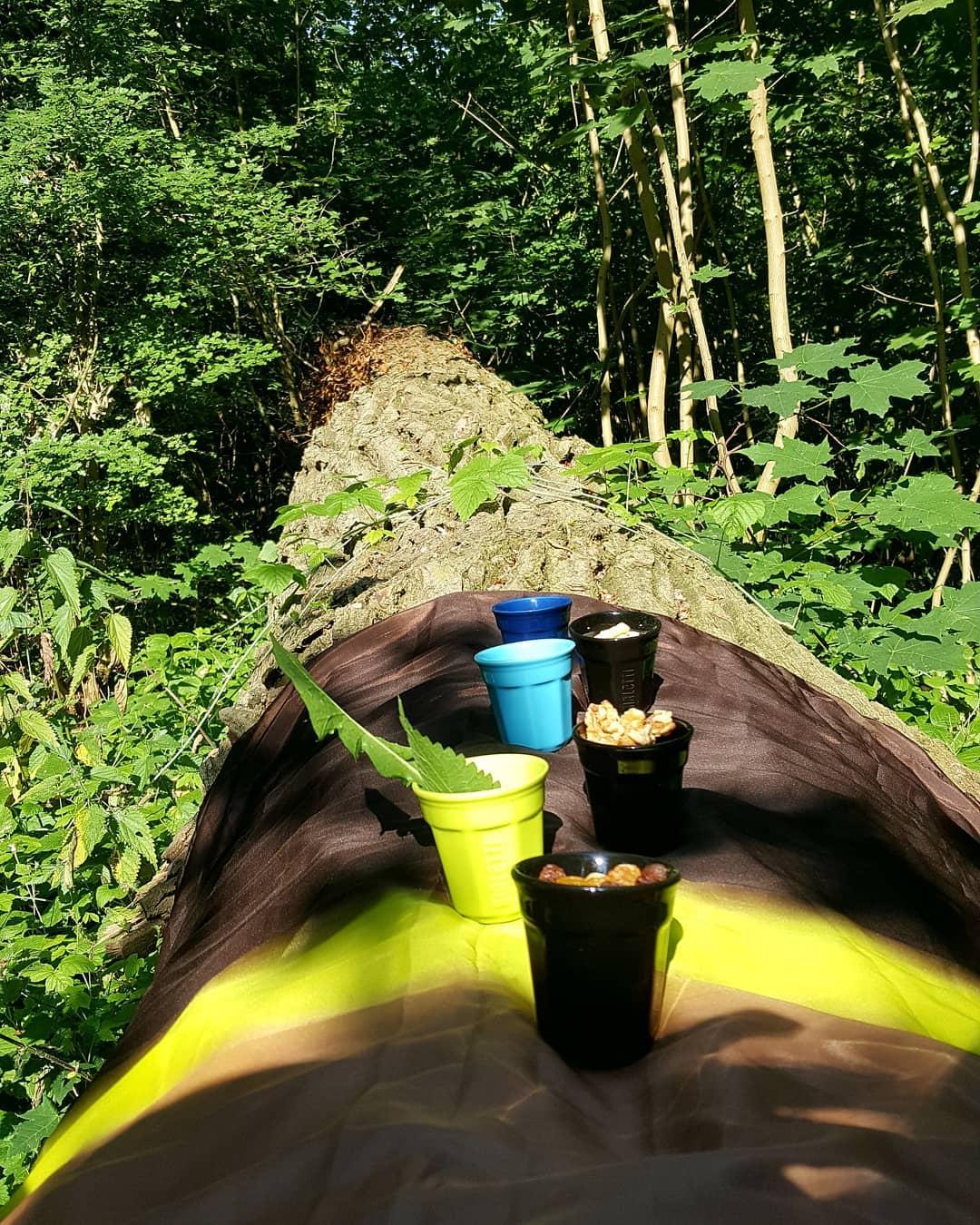 Shinrin-yoku Tea ceremony
