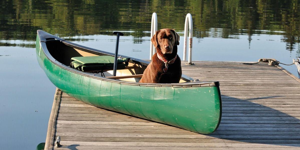 Irish Setter in Canoe