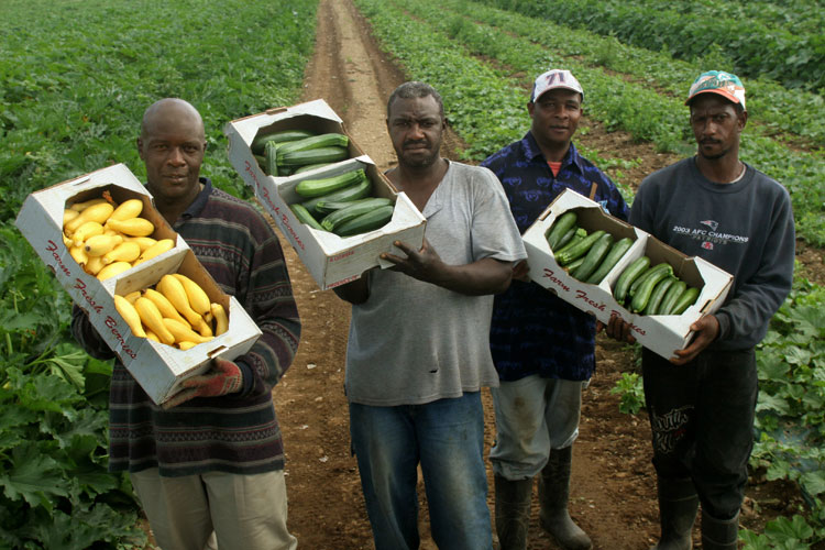 Farmworkers in Maine
