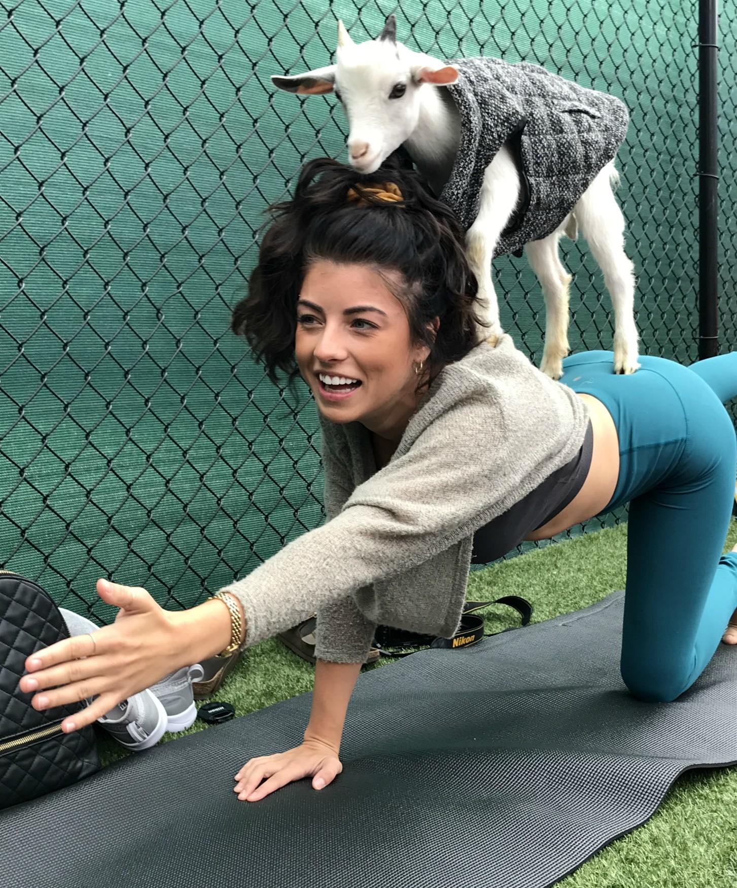 goat yoga chattanooga