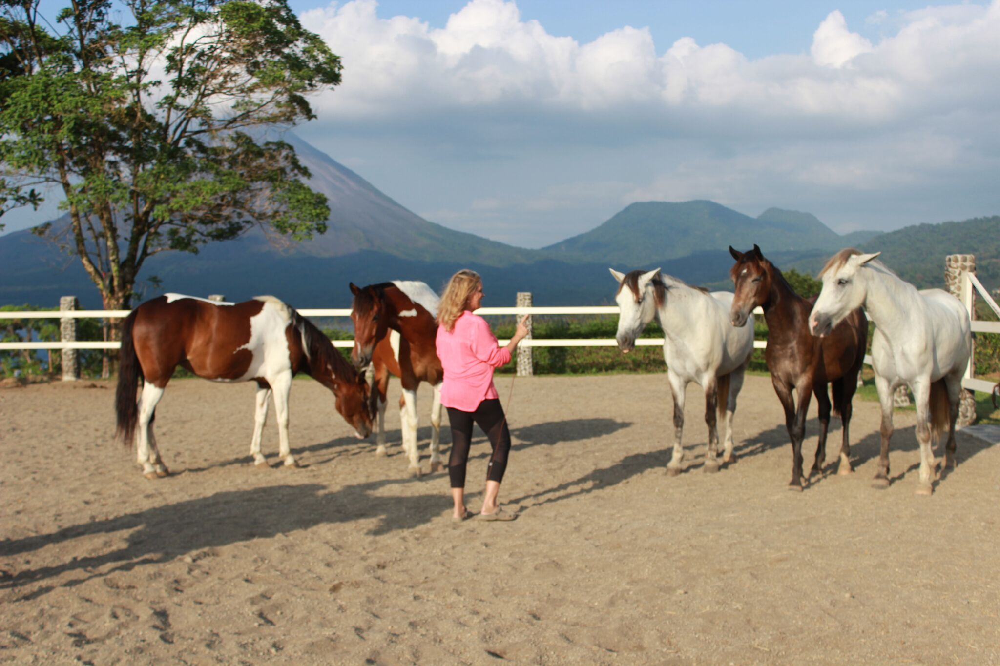 Carolyn Resnick Method Liberty Horse Training 3 Day Clinic Tickets