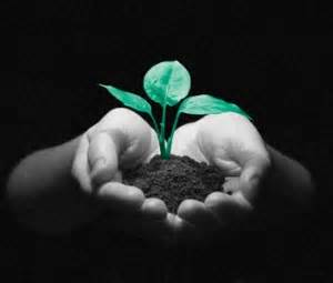 Seedling picture