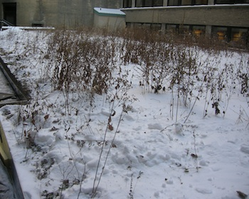 snow and green roof