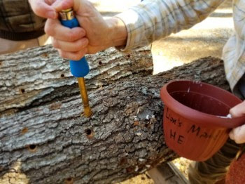 Log inoculation