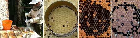Testing Honey Bee Colonies for Hygienic Behaviour