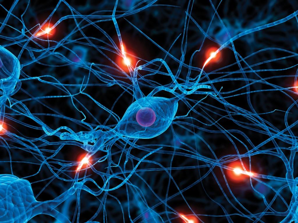 pgneuro21024x768 NeuroNegociación: Aprende cómo funciona tu mente y las de los demás a la hora de negociar