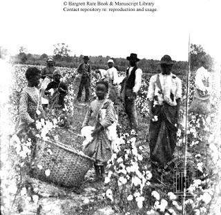 2014 cotton diaries