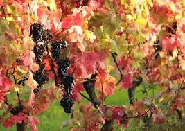 Denbies Wine Estate in Autumn